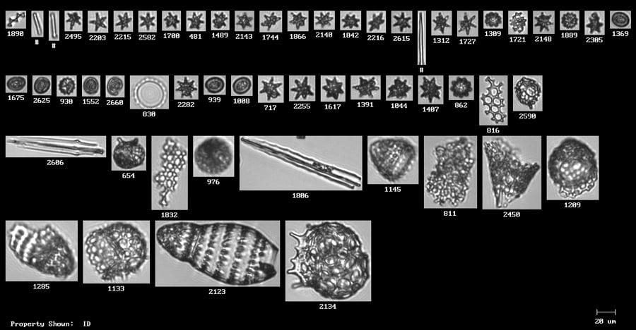 Microfossils analyzed by FlowCam