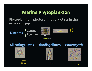 Marine phytoplankton classification FlowCam images