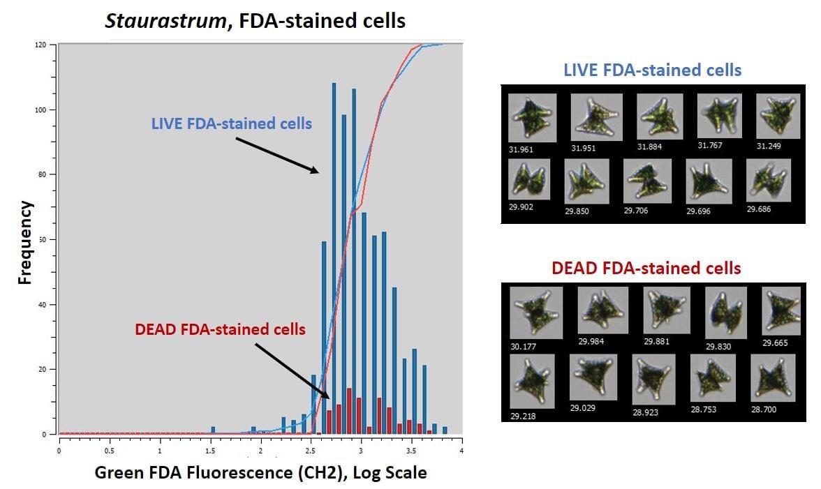 FDA Stain Figure 1