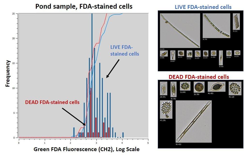 FDA Stain Figure 2