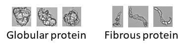 FlowCam protein images - Bioscreen