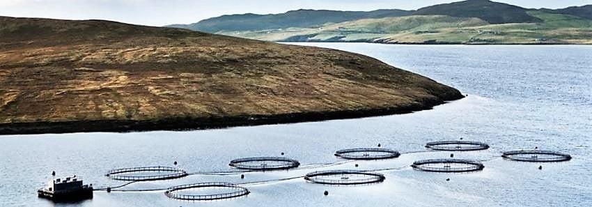 Grieg salmon pens Shetland