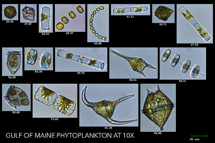 Gulf of Maine Phytoplankton captured by FlowCam