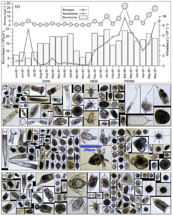 Karnan Figure 4 - FlowCam images