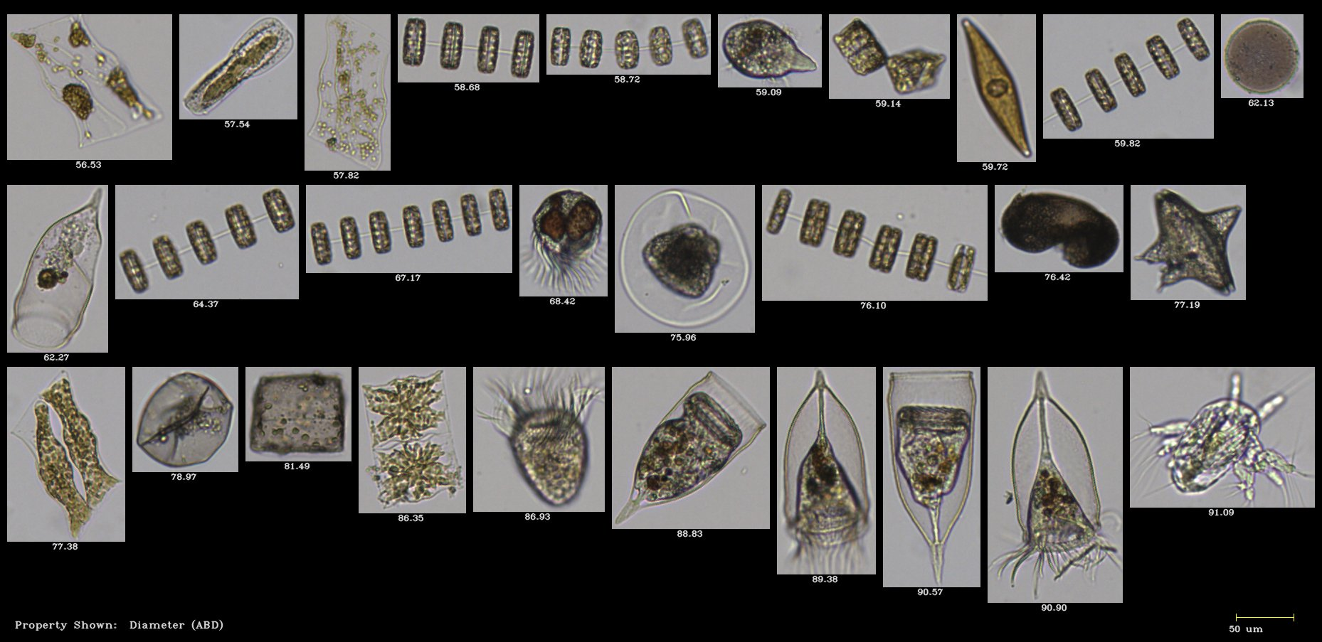 FlowCam plankton images from BLOOM Educators Program