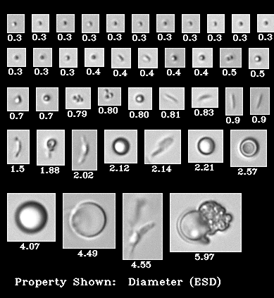NIST protein standards imaged on the FlowCam Nano at 40X